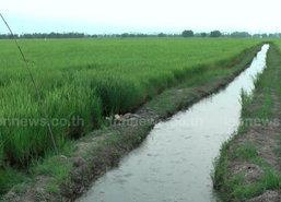 ชาวนาปราจีนบุรีทุกข์ซ้ำน้ำเค็มหนุนขาดแคลนน้ำจืด