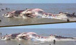 พบซากวาฬบรูด้าลอยขึ้นอืดในทะเลสมุทรปราการ
