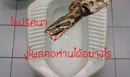 ไขปริศนาความสยอง งูโผล่จากโถส้วมได้ไหม