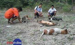 ช่วยสุนัข 10 ชีวิตถูกวางยาสลบทิ้งอุทยานหินเขางู