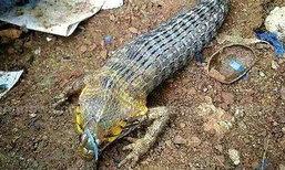 ฮือฮา ลำปางพบสัตว์แปลกคล้ายงู แต่มีขาหน้า 2 ขา
