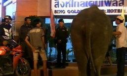 ควาญช้างเมืองสงขลาทำร้ายนักท่องเที่ยว