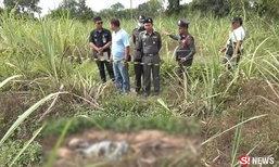 สลด พบโครงกระดูกผู้หญิงกลางป่าอ้อย นอนตายท่าถูกขึงพืด
