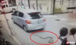 กรี๊ดลั่นโรงเรียน! งูเหลือม 3 ม. หล่นใต้ท้องรถ เลื้อยตัดหน้านักเรียน