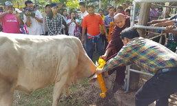 คนไทยน้ำใจงาม แห่ไถ่ชีวิตวัวรอดตายรถไฟชน ยอดเงินทะลุล้าน!