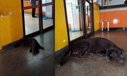 แชร์สนั่น! สุนัขถูกลืมที่คาร์โกสายการบิน ชาวเน็ตตามหาเจ้าของ