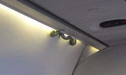 สะพรึง! งูโผล่บนเครื่องบินแอร์โรเม็กซิโก