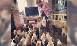 หญิงหลงรักหมาปั๊ก รับเลี้ยงไว้กว่า 30 ตัว ใช้เงินดูแลปีละกว่า 8.8 แสนบาท