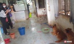 สลด เจ้าของป่วยหนักนอนรพ. หมาในบ้านหิวโซจนกินกันเอง