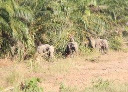 จันทบุรีเปิดแหล่งท่องเที่ยวเชิงนิเวศวิถีชีวิตช้างป่า