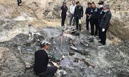 DSI เตรียมรับคดีล่าช้างป่าสวมตั๋วรูปพรรณเป็นช้างบ้าน ให้เป็นคดีพิเศษ