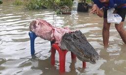 สุดอึ้ง! น้ำท่วมเมืองคอนจระเข้หลุดจากฟาร์ม ชาวบ้านจับแล่เนื้อ