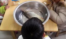 เอ็นดู! หนูน้อยชาวจีนเอาปลามาโรงเรียน แต่ไม่เหมือนเพื่อน