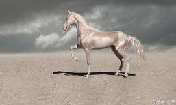 """ม้าเหงื่อโลหิต! องอาจสง่างามสมฉายา """"อาชาจากสวรรค์"""""""