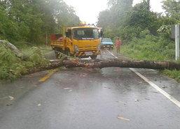 อุตุฯเผยทุกภาคมีฝนแนะเลี่ยงต้นไม้ใหญ่ป้ายโฆษณา
