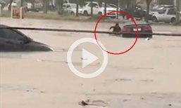 คลิปนาทีชีวิต   หนุ่มปีนออกจากเก๋งหนีตาย  หลังน้ำท่วมสูงไม่สามารถควบคุมรถได้