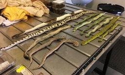 ตะลึง ..ศุลกากรออสเตรเลียตรวจพบ สัตว์มีพิษถูกส่งมาทางไปรษณีย์