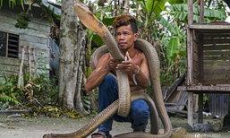 ชายอินโดฯ จับงูจงอางขนาดใหญ่มาเลี้ยง หลังเลื้อยเข้าจู่โจมคนในหมู่บ้าน