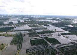 น้ำยังท่วมอ.ปากพนังเมืองคอนสูง3ม.หนักสุด3ตำบล