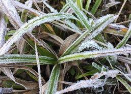 อากาศเย็นทำดอยอินทนนท์เกิดเหมยขาบเป็นวันที่4ในปี60