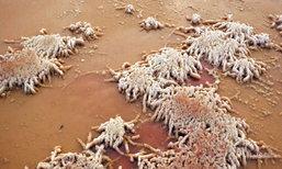 ตื่นตา! ปรากฏการณ์เกลือทะเลสาบเดดซีแห่งเมืองจีนเป็นน้ำแข็ง