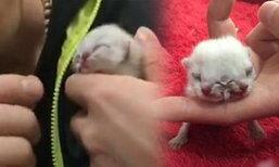 ฮือฮา! แมวประหลาดเกิดมามี 2 หัว 3 ตา พบยาก 1 ในล้าน