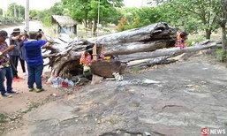 ชาวบ้านฮือฮา พบขอนไม้ให้โชคที่สวนสัตว์ขอนแก่น