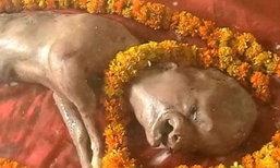 ฮือฮา! ลูกวัวอินเดียหน้าคล้ายคน ชาวบ้านแห่ไหว้ เชื่อเป็นพระวิษณุอวตาร