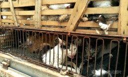 จนท.จีนจับโจรขโมยแมวกว่า 500 ตัว ก่อนทันได้ส่งขายต่างถิ่น