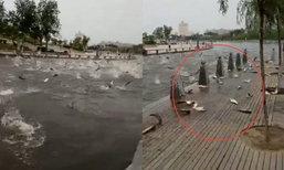 ตื่นตะลึง! ฝูงปลาในสวนสาธารณะที่จีนกระโดดขึ้นฝั่งเอง