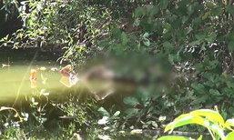 ผงะ! พบศพหญิงวัย 68 ปี ลอยอืดกลางสระน้ำ