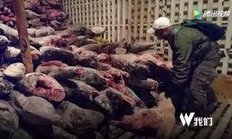 เอกวาดอร์จับกุมเรือประมงจีนจับปลา-ฉลาม 300 ตัน พร้อมลูกเรือ 20 คน