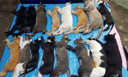 ปิดตำนานแมวสวนลุม จับทำหมัน-ย้ายที่อยู่ ชาวเน็ตวิจารณ์เสียงแตก