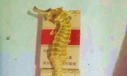 ตะลึง! ชาวประมงจีนจับได้ม้าน้ำสีทองสุดหายาก