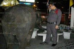 กทม.ตั้งโครงการช้างยิ้มหวังแก้ช้างเร่ร่อน
