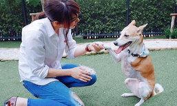 โมเม้นต์น่ารัก เชียร์ ฑิฆัมพร กับไม้หมอน สุนัขสามขา
