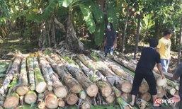 บวงสรวงตัดกล้วยตานี 60 ต้น แทงหยวกประดับพระจิตกาธาน