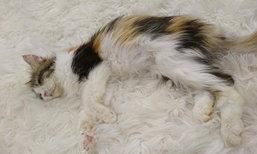 ฟังสองมุม คาเฟ่หมาแมวปล่อยสัตว์ป่วยตาย สัตวแพทย์ตรวจสอบแล้ว