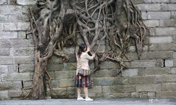สวยแปลกตา ต้นไม้สุดแกร่ง หยั่งรากเกาะกำแพงหินหนาที่ฉงชิ่ง