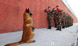 ทำความเคารพ! สุนัขตำรวจยืนบอกลาเพื่อนทหารเกษียณอายุ