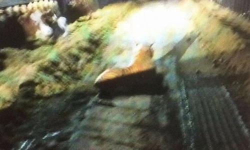 """หนุ่มตกใจเจอ """"เสือ"""" ในฟาร์ม ตร.บุกซุ่มนับชั่วโมง สุดท้ายแค่ตุ๊กตา"""