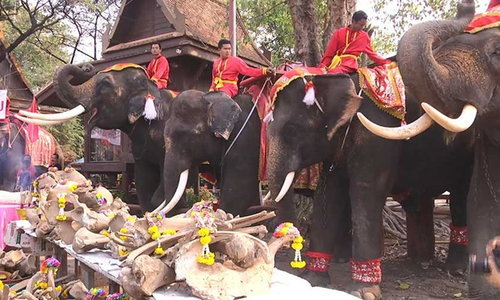 วังช้างแลเพนียด อยุธยา จัดเลี้ยงโต๊ะจีนช้าง เนื่องในวันช้างไทย