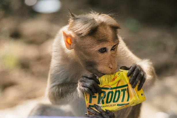 ลิง หนึ่งในสัตว์ที่ตกเป็นเหยื่อจากความไม่รู้ของมนุษย์