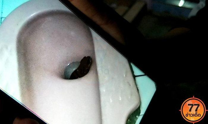 ระทึกกลางดึก สาวอาบน้ำผวาสุดขีด เห็นหัวงูโผล่ในโถส้วม