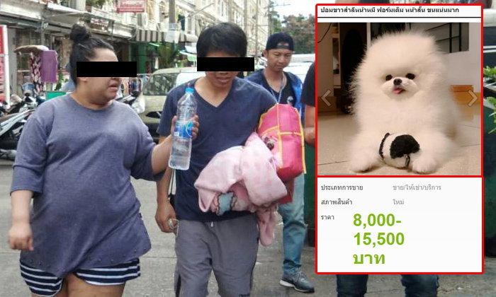จับ 2 หนุ่มสาว โพสต์หลอกขายหมา-แมว เสียหายนับล้าน ถูกจับแล้วหลายครั้งแต่ไม่เข็ด