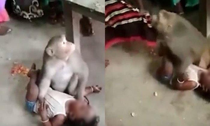 ลิงป่าบุกเข้าบ้าน เปิดศึกลักพาตัวเด็กชาวอินเดีย ทำทีเหมือนเป็นลูก