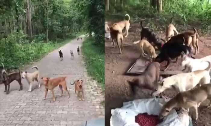 สลด! สุนัขถูกทิ้งนับร้อย สภาพหิวโซ วอนหน่วยงานเข้าช่วยเหลือด่วน