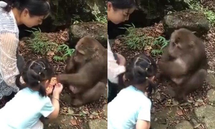 ลิงโหด ต่อยหนูน้อยล้มตึง ขณะยื่นมือป้อนอาหารให้ (มีคลิป)
