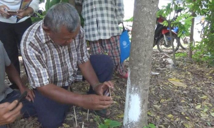 ชาวบ้านแห่ลูบเบาๆ ส่องเลขจากต้นมะยม งวดก่อนให้โชค 2 ตัวตรงเป๊ะ