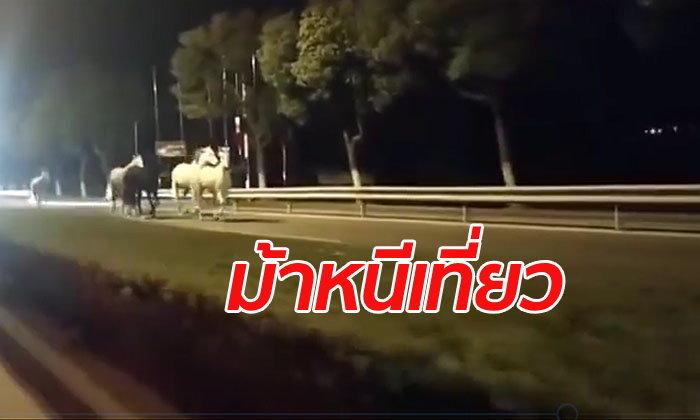 เท่มาก! ฝูงม้าแข่งพันธุ์ดี 9 ตัววิ่งหนีจากฟาร์ม วิ่งเล่นบนถนนกลางเซี่ยงไฮ้